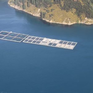 NZ King Salmon farm at Te Pangu – Tory Channel